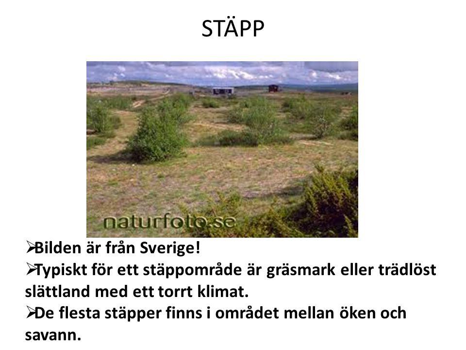 STÄPP Bilden är från Sverige!