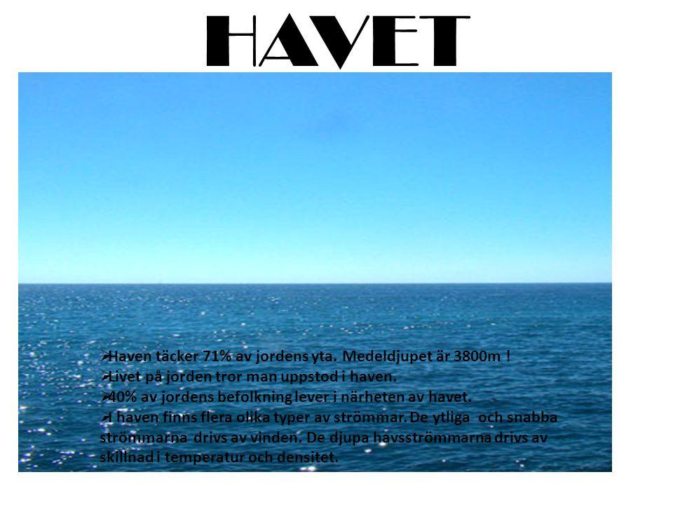 HAVET Haven täcker 71% av jordens yta. Medeldjupet är 3800m !