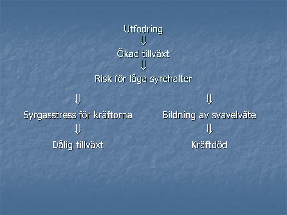 Utfodring  Ökad tillväxt  Risk för låga syrehalter