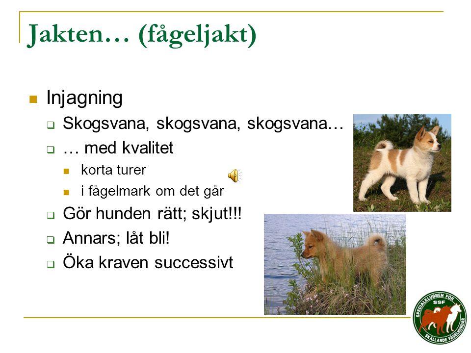Jakten… (fågeljakt) Injagning Skogsvana, skogsvana, skogsvana…