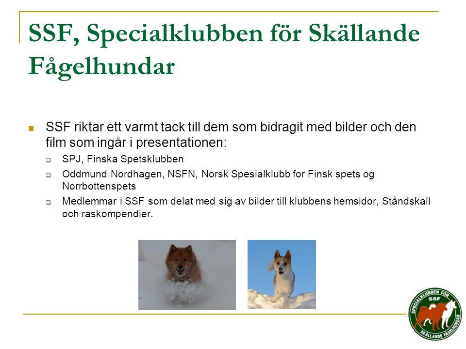 SSF, Specialklubben för Skällande Fågelhundar