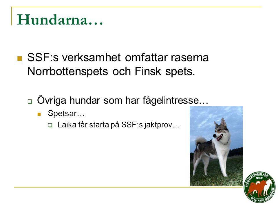 Hundarna… SSF:s verksamhet omfattar raserna Norrbottenspets och Finsk spets. Övriga hundar som har fågelintresse…