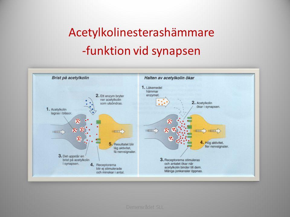 Acetylkolinesterashämmare -funktion vid synapsen