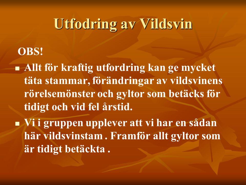 Utfodring av Vildsvin OBS!