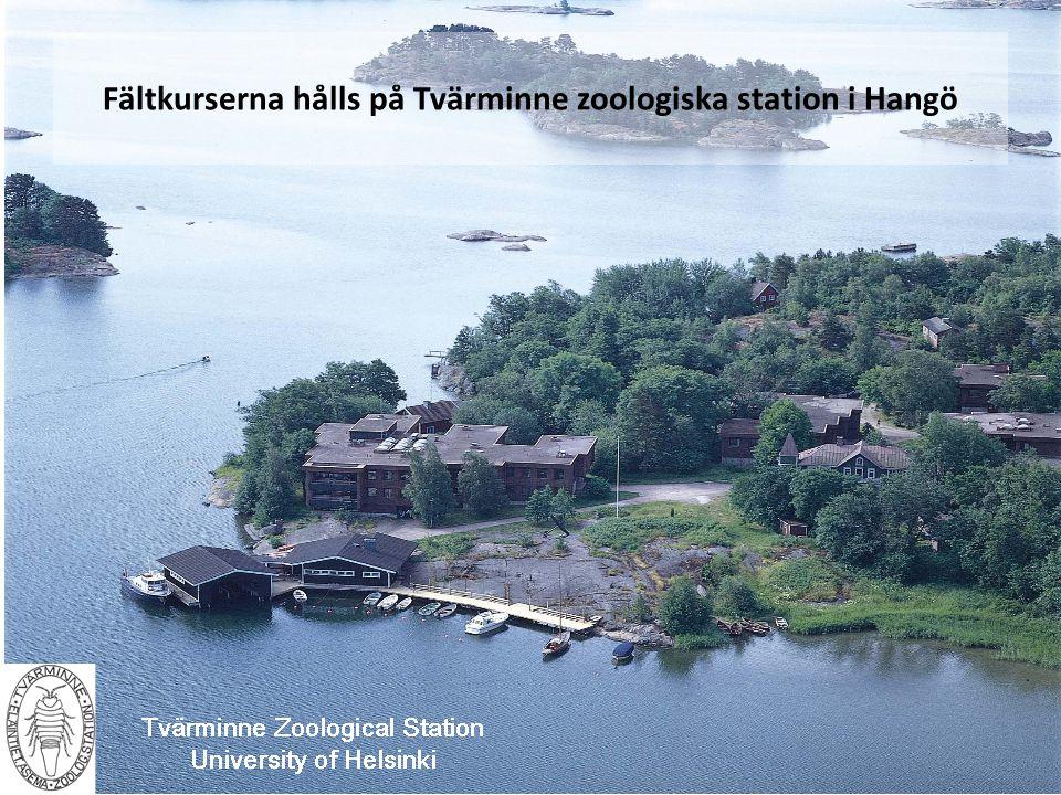 Fältkurserna hålls på Tvärminne zoologiska station i Hangö