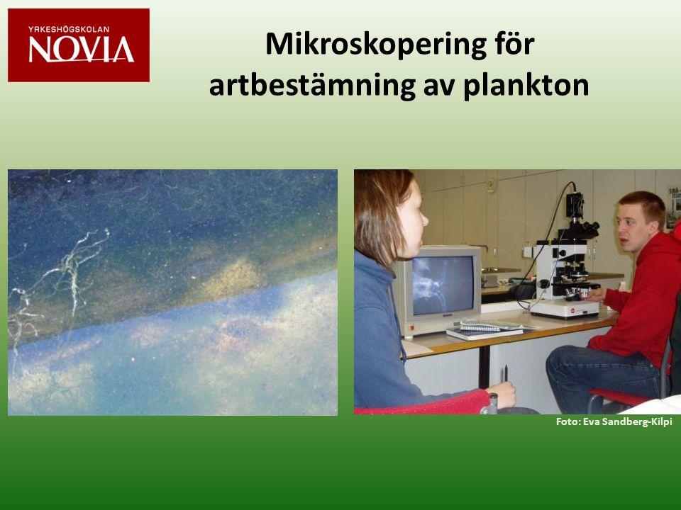 Mikroskopering för artbestämning av plankton
