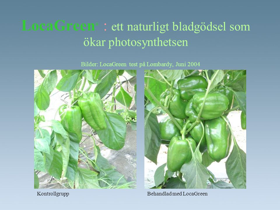 LocaGreen® : ett naturligt bladgödsel som ökar photosynthetsen