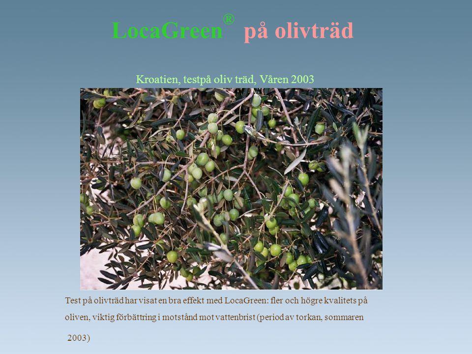 LocaGreen® på olivträd