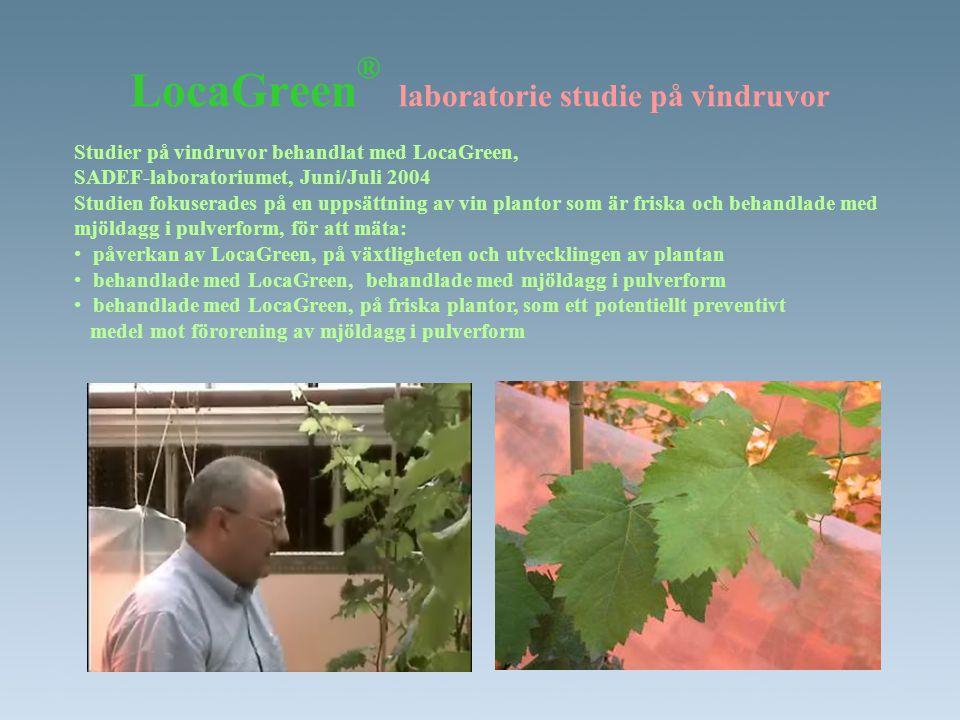 LocaGreen® laboratorie studie på vindruvor