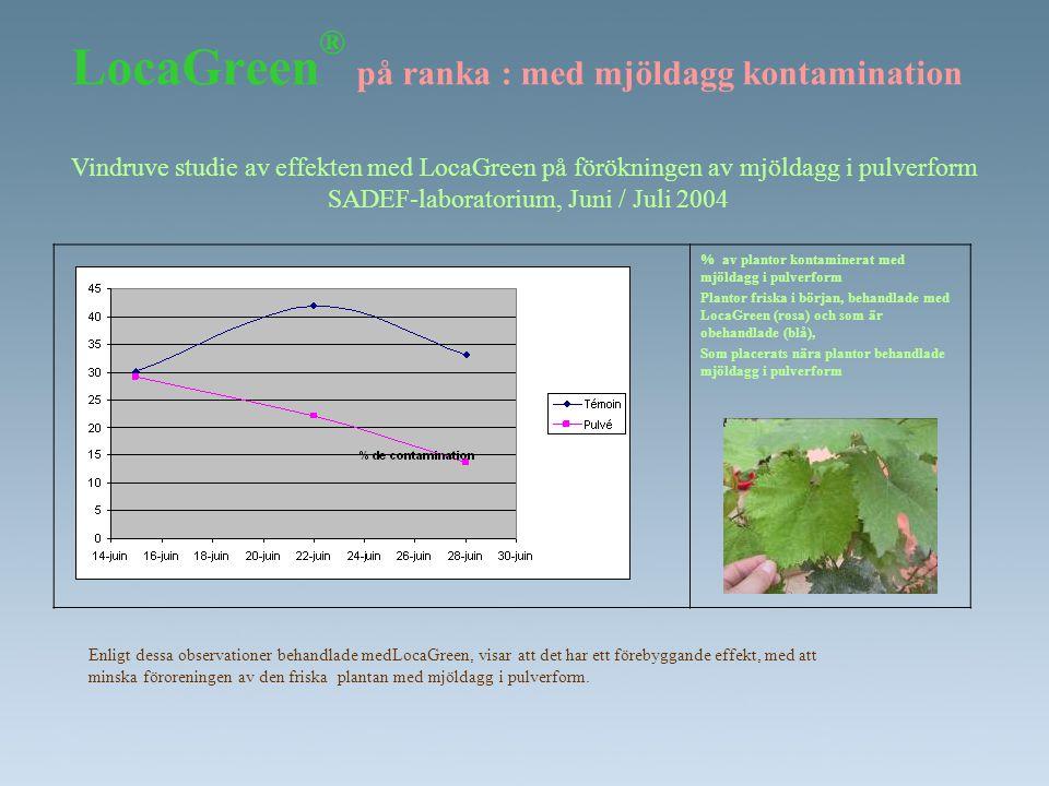 LocaGreen® på ranka : med mjöldagg kontamination