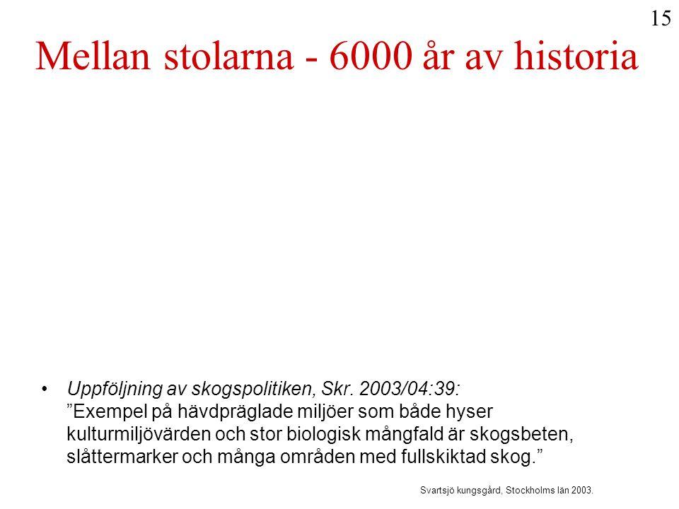 Mellan stolarna - 6000 år av historia