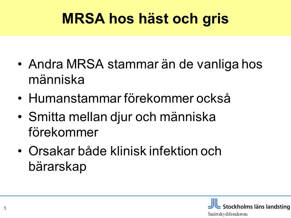 MRSA hos häst och gris Andra MRSA stammar än de vanliga hos människa
