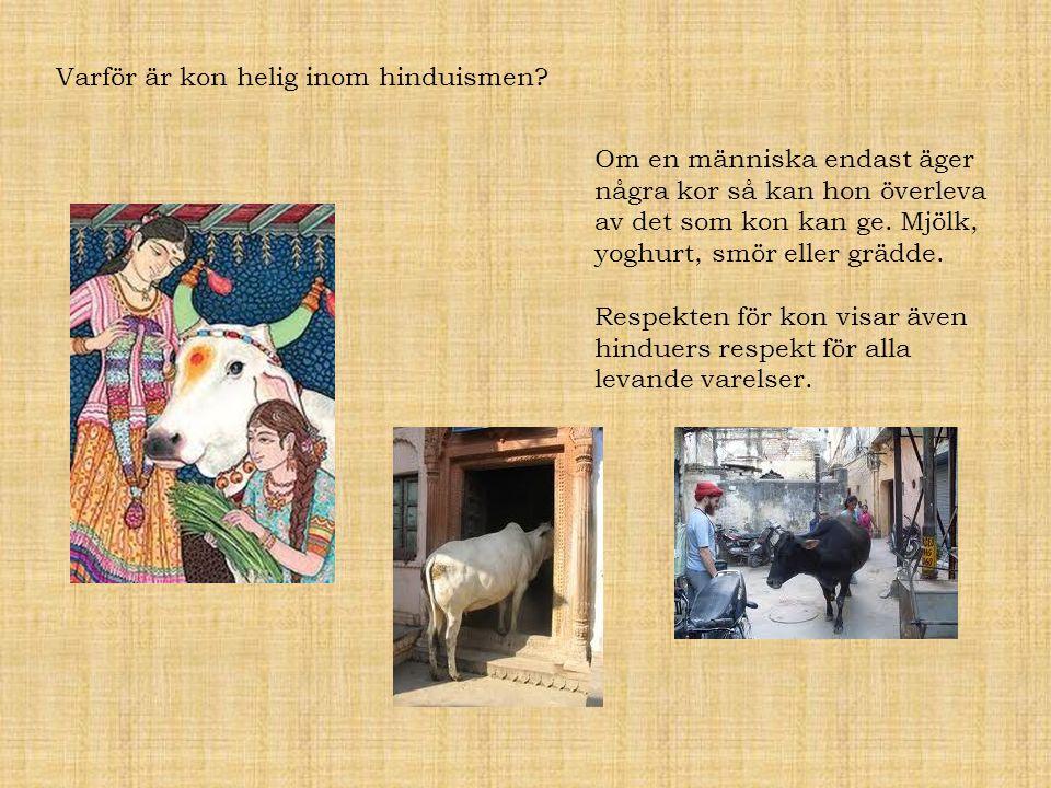 Varför är kon helig inom hinduismen