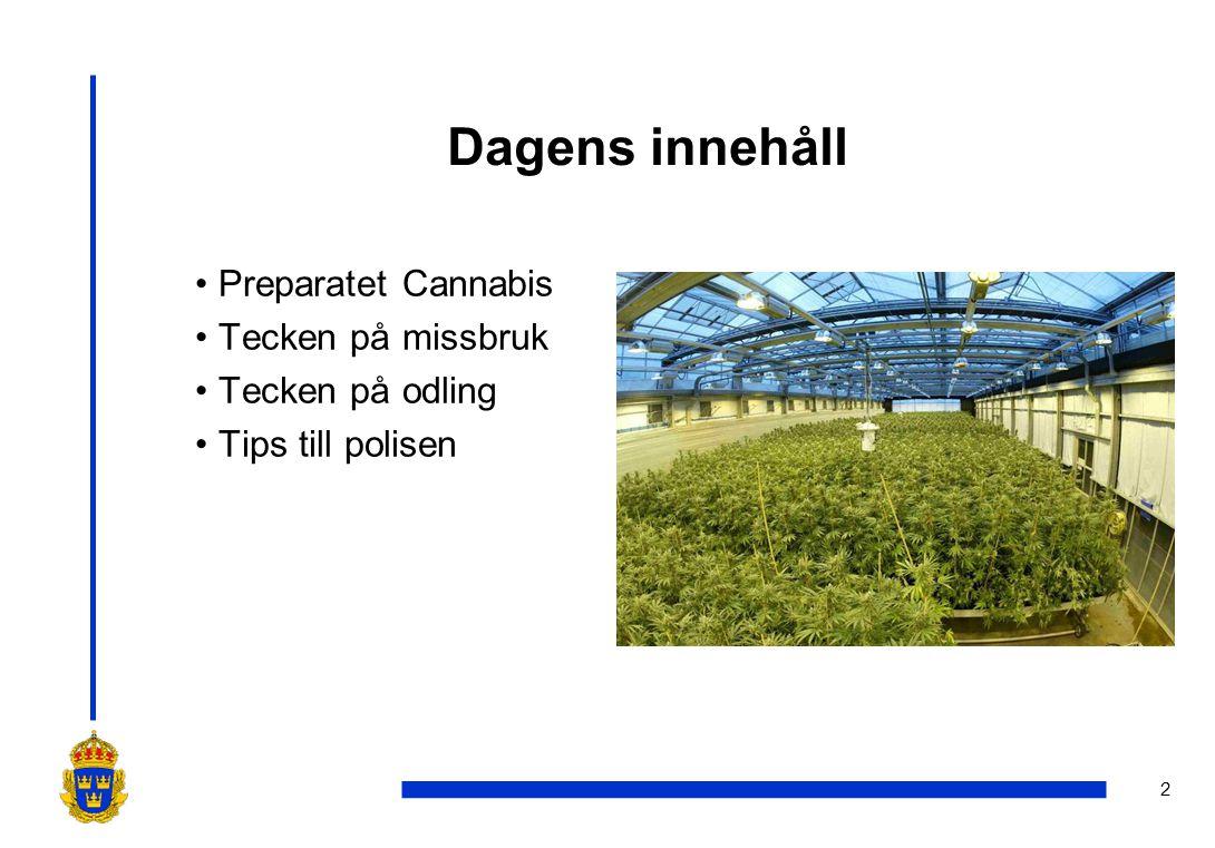 Dagens innehåll Preparatet Cannabis Tecken på missbruk