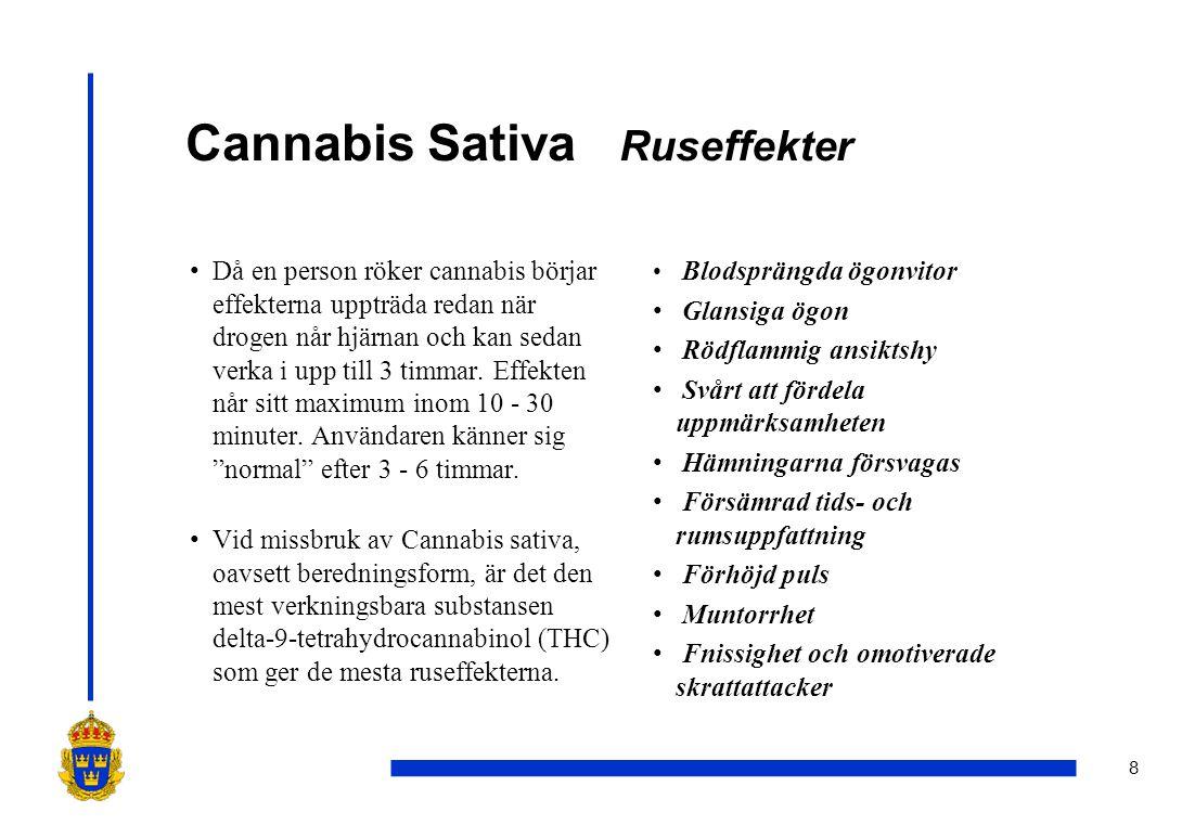 Cannabis Sativa Ruseffekter