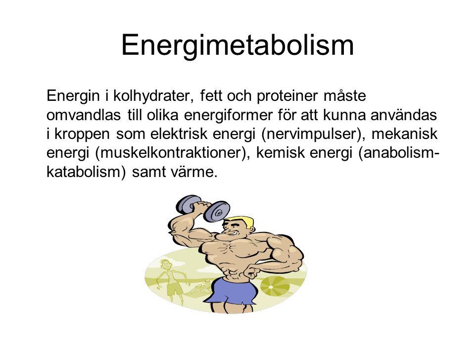 Energimetabolism