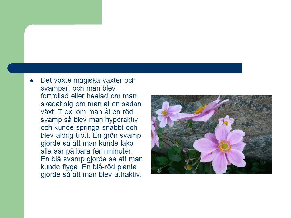 Det växte magiska växter och svampar, och man blev förtrollad eller healad om man skadat sig om man åt en sådan växt.