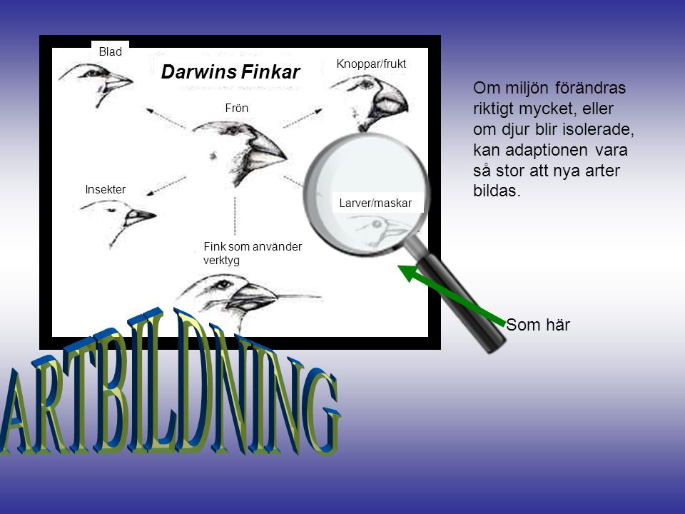 ARTBILDNING Darwins Finkar