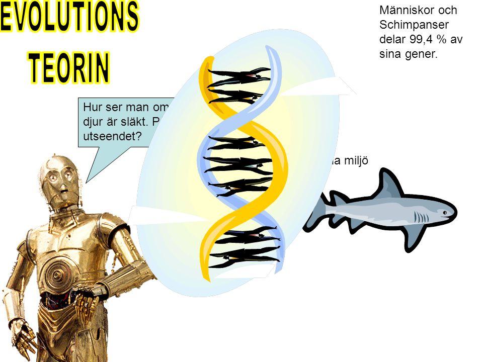 EVOLUTIONS TEORIN. Människor och Schimpanser delar 99,4 % av sina gener. Däggdjur. Hur ser man om olika djur är släkt. På utseendet