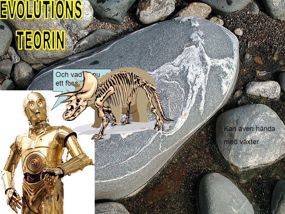 EVOLUTIONS TEORIN Och vad är nu ett fossil Kan även hända med växter