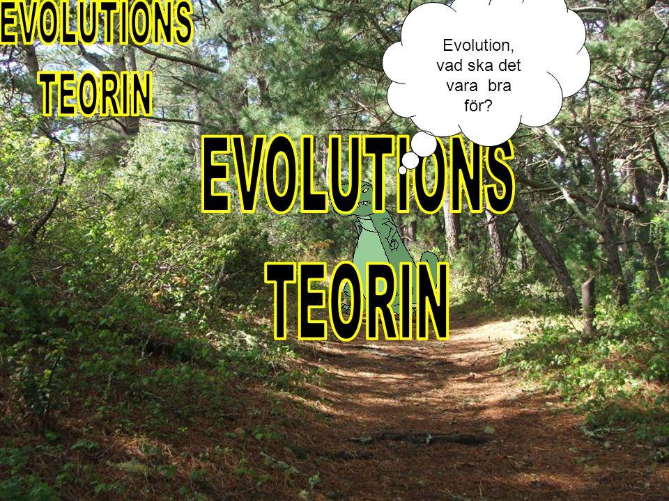 EVOLUTIONS TEORIN EVOLUTIONS TEORIN Evolution, vad ska det vara bra
