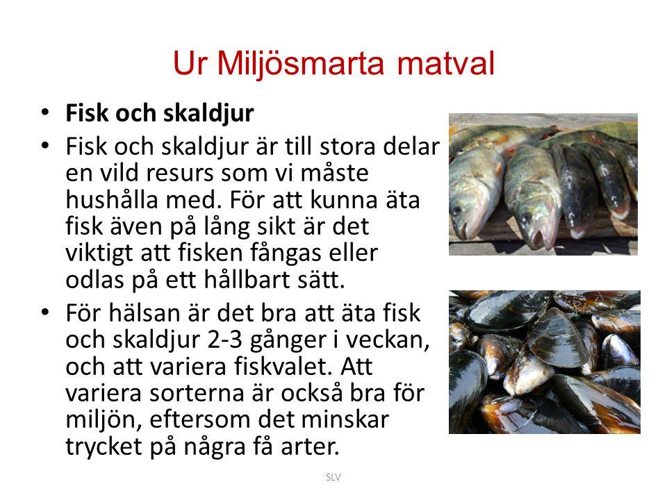 Ur Miljösmarta matval Fisk och skaldjur