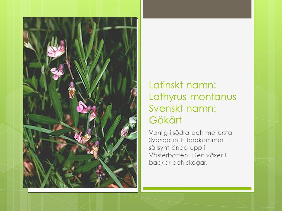 Latinskt namn: Lathyrus montanus Svenskt namn: Gökärt