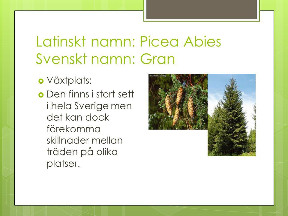 Latinskt namn: Picea Abies Svenskt namn: Gran