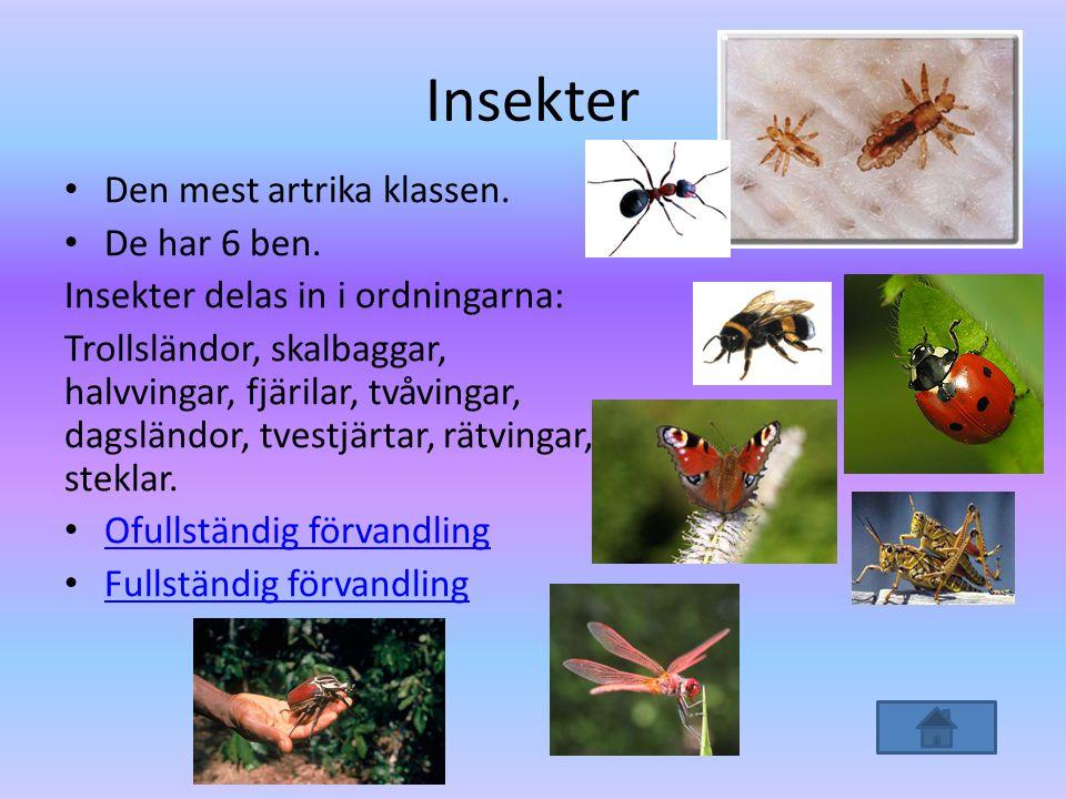 Insekter Den mest artrika klassen. De har 6 ben.