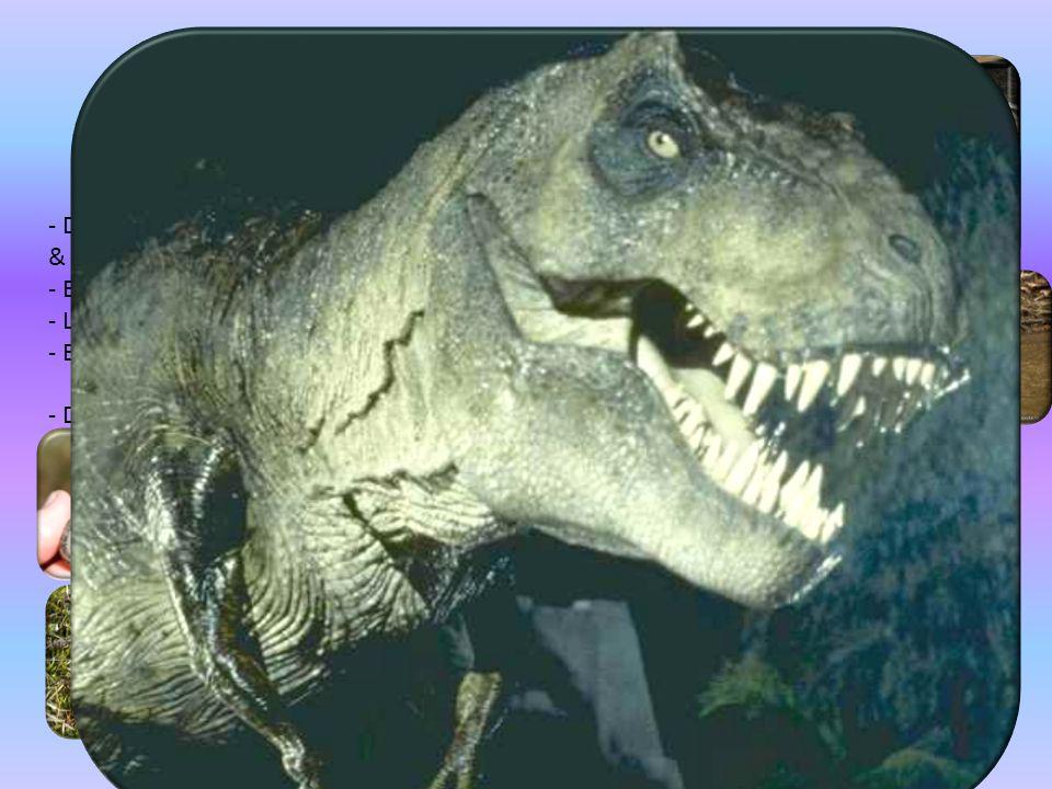 Kräldjur Reptiler - Delas in i : fjällbärande reptiler, sköldpaddor & krokodiler. - Ej vattenberoende.
