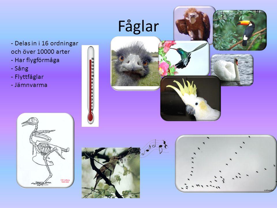 Fåglar - Delas in i 16 ordningar och över 10000 arter