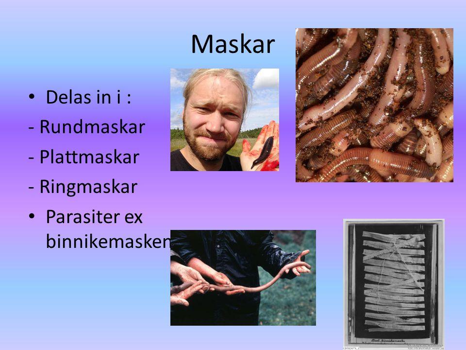 Maskar Delas in i : - Rundmaskar - Plattmaskar - Ringmaskar