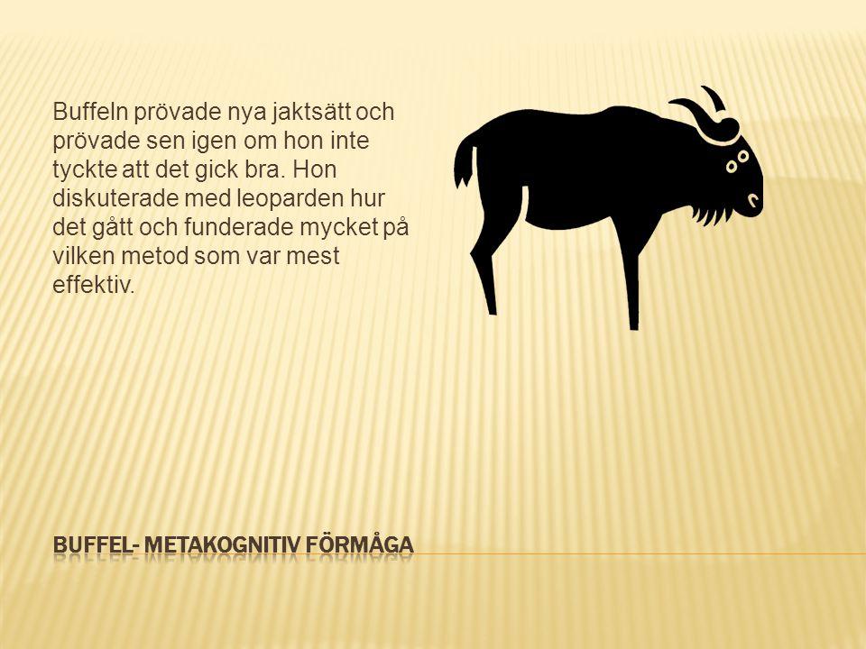 Buffel- Metakognitiv förmåga