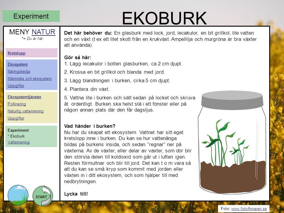 EKOBURK Experiment MENY NATUR