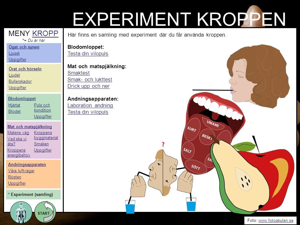 EXPERIMENT KROPPEN MENY KROPP