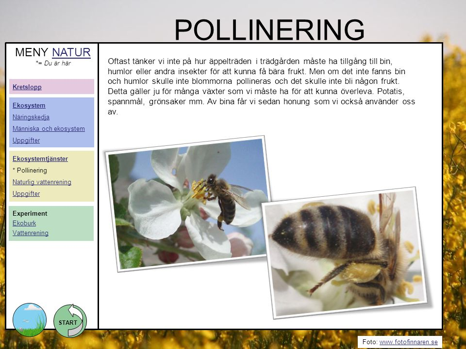 POLLINERING MENY NATUR