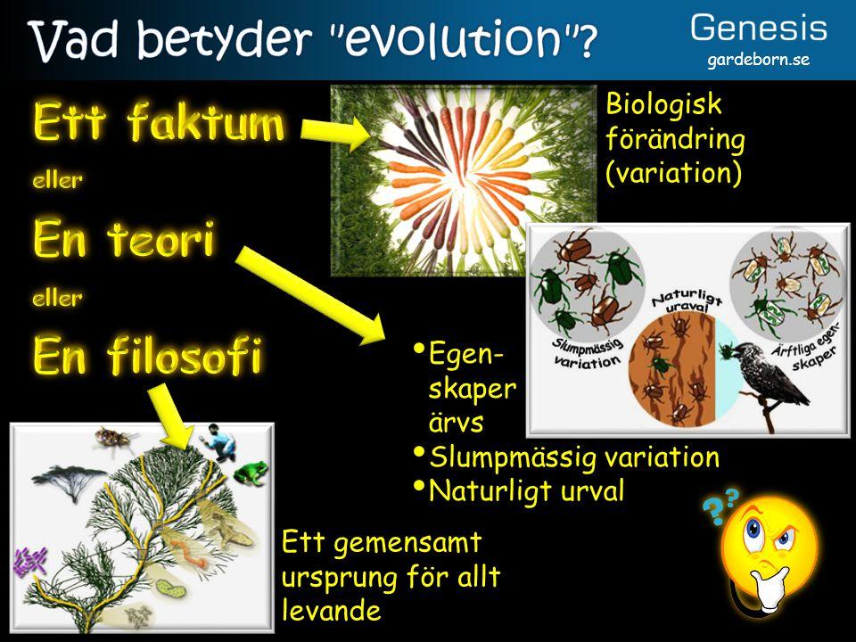 Vad betyder evolution Ett faktum En teori En filosofi