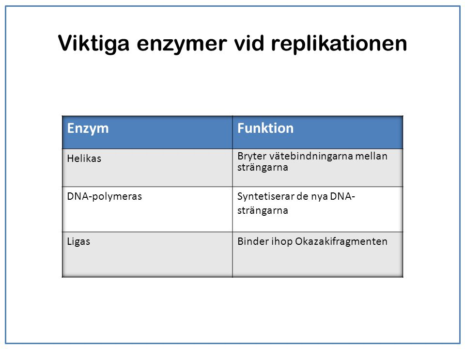 Viktiga enzymer vid replikationen