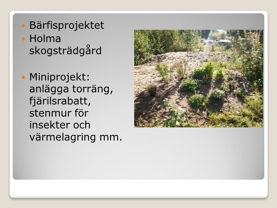 Bärfisprojektet Holma skogsträdgård.