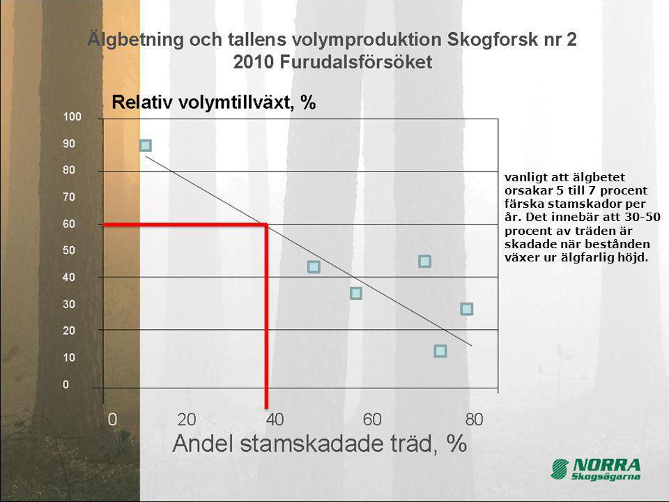 vanligt att älgbetet orsakar 5 till 7 procent färska stamskador per år