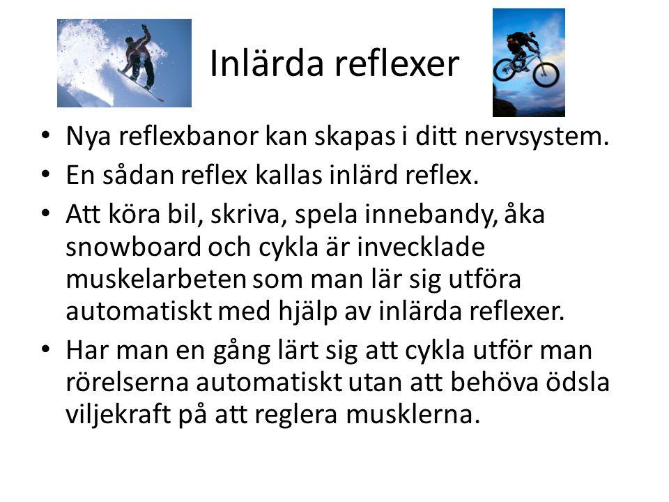 Inlärda reflexer Nya reflexbanor kan skapas i ditt nervsystem.