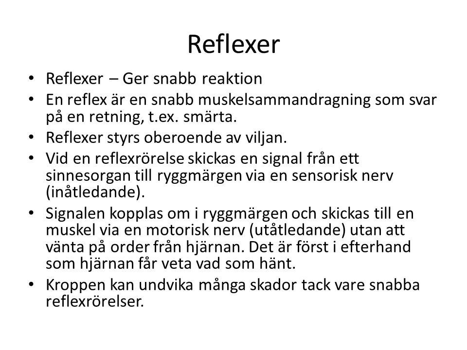 Reflexer Reflexer – Ger snabb reaktion