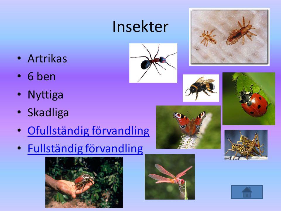 Insekter Artrikas 6 ben Nyttiga Skadliga Ofullständig förvandling