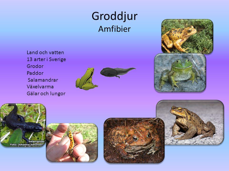 Groddjur Amfibier Land och vatten 13 arter i Sverige Grodor Paddor