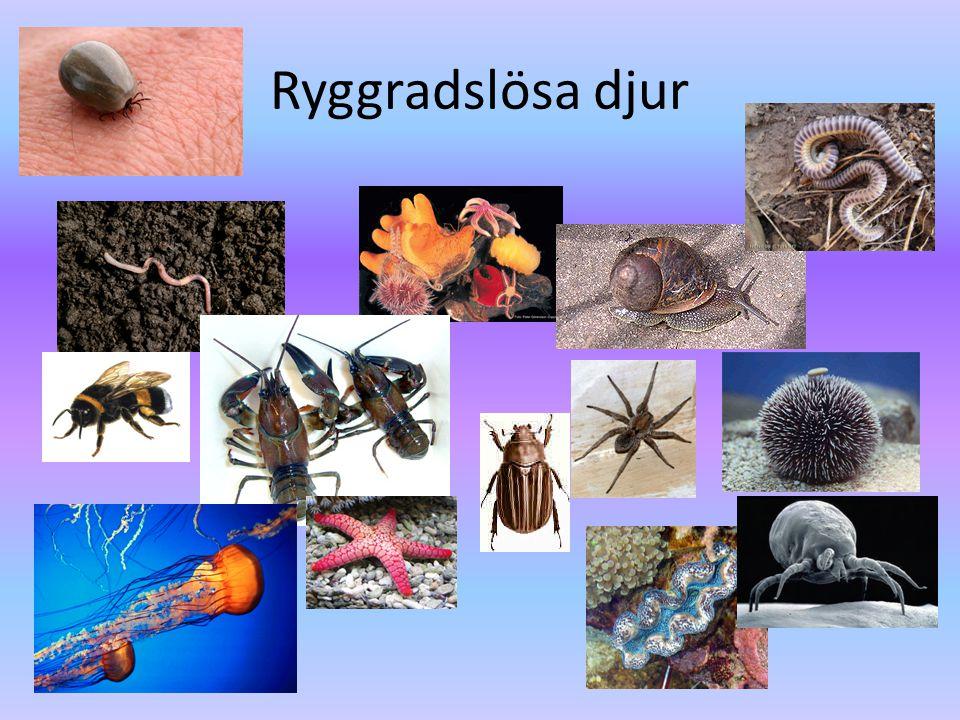 Ryggradslösa djur