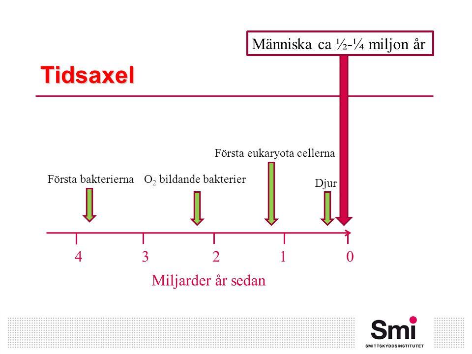Tidsaxel Människa ca ½-¼ miljon år 4 3 2 1 0 Miljarder år sedan