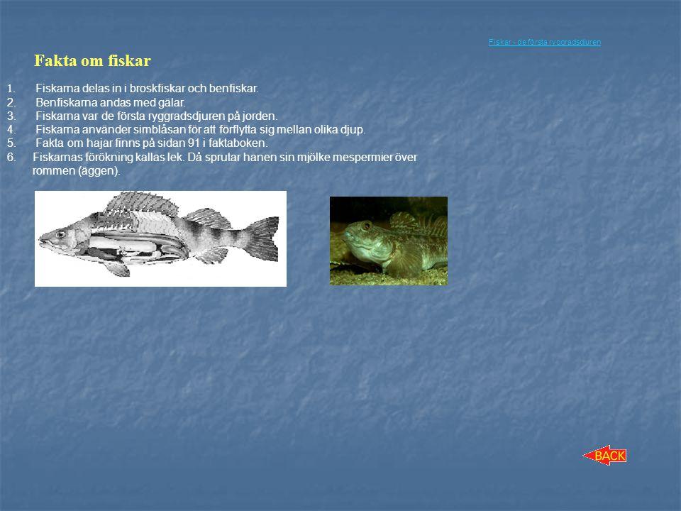 Fakta om fiskar Fiskarna delas in i broskfiskar och benfiskar.