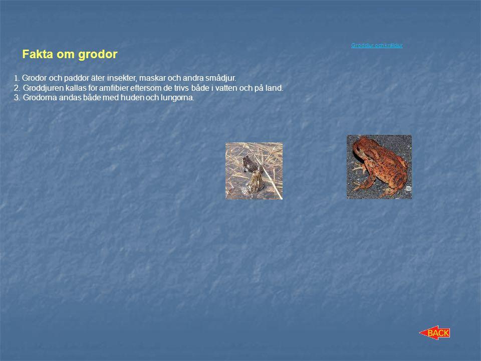 Groddjur och kräldjur Fakta om grodor. 1. Grodor och paddor äter insekter, maskar och andra smådjur.
