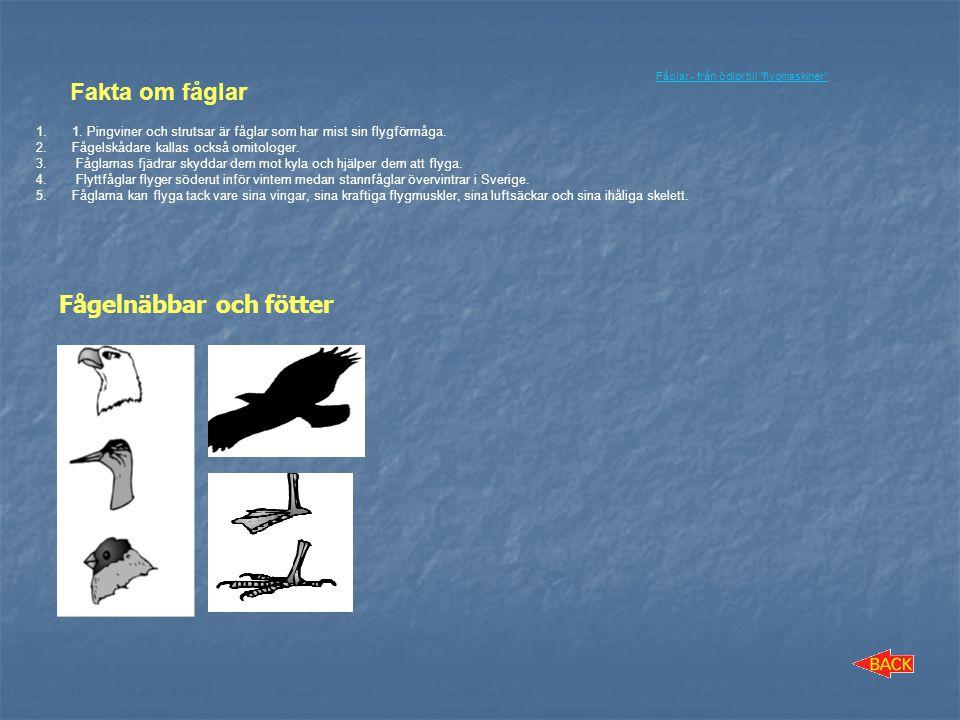 Fågelnäbbar och fötter