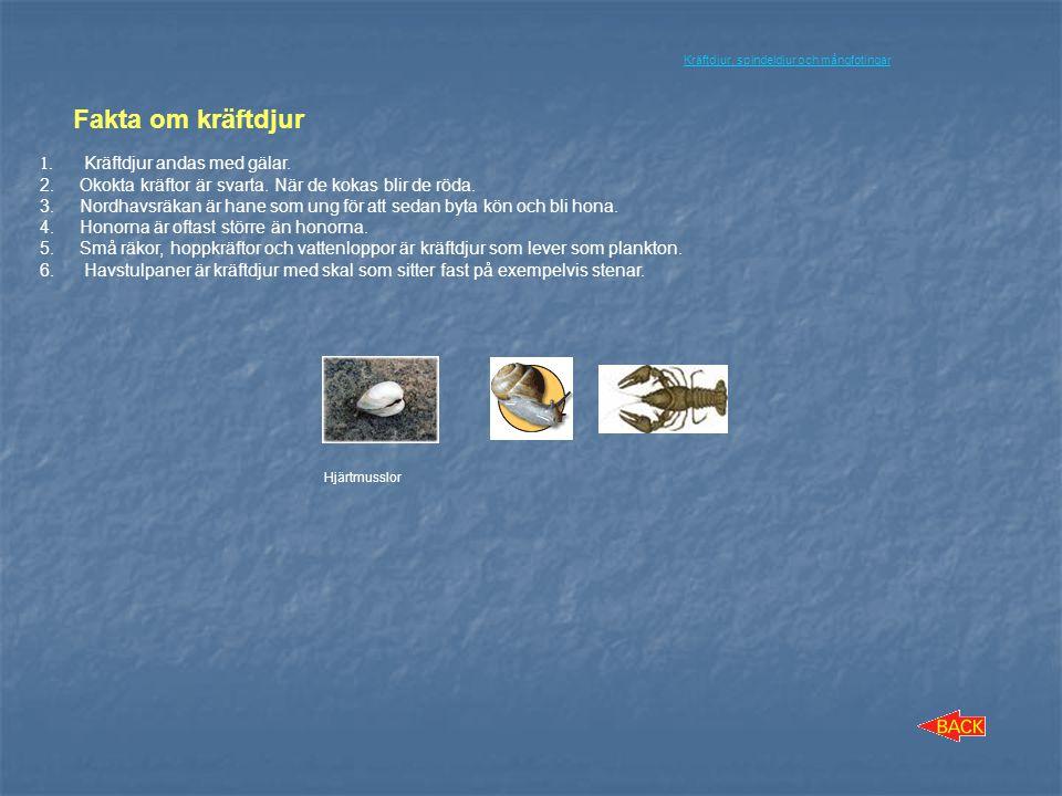 Fakta om kräftdjur Kräftdjur andas med gälar.